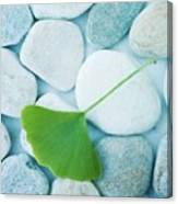 Stones And A Gingko Leaf Canvas Print