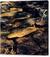 Stoney Water Canvas Print
