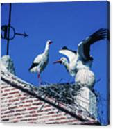 Storks Of Segovia Canvas Print