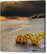 Storm And Sea Shell On Sanibel Canvas Print