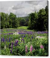 Storm In The Lupine Canvas Print