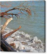 Storm Ravaged Canvas Print