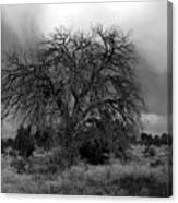 Storm Tree Canvas Print