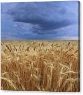 Stormy Wheat Field Canvas Print