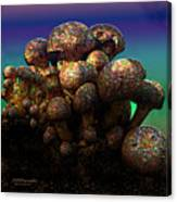Strange Mushrooms 2 Canvas Print