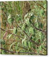 Strange Weed Canvas Print