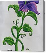 Strangler Hibiscus Canvas Print