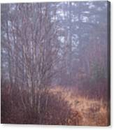 Straw Path Canvas Print