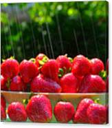 Strawberries And Summer Showers Canvas Print