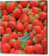 Strawberries Jersey Fresh Canvas Print
