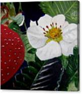 Strawberry And Blossom Canvas Print