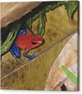 Strawberry Poison Dart Frog Canvas Print