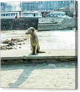 Stray By The River Signed First Edition Canvas Print
