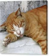 Stray Cat Sleeps On The Floor-1 Canvas Print