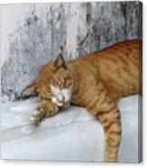 Stray Cat Sleeps On The Floor-2 Canvas Print