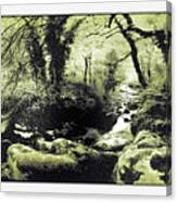 Stream In An Ancient Wood Canvas Print