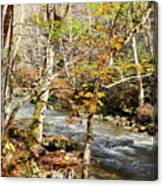 Stream In An Autumn Woods Canvas Print