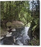 Stream In  Rainforest Canvas Print