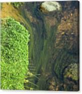 Stream Of Weeds I Canvas Print