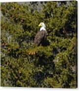 Streamside Eagle Canvas Print