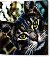 Street Cat II Canvas Print