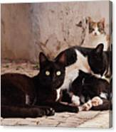 Street Cats - Portugal Canvas Print