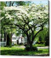 Street With Dogwood Canvas Print