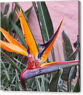 Strelitzia Double Bloom Canvas Print