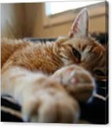 Stretching Cat Canvas Print