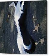 Stretchy Cat Canvas Print
