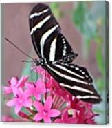 Striped Beauty - Butterfly Canvas Print