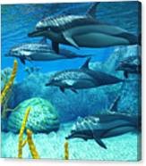 Striped Dolphins Canvas Print