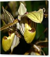 Striped Orchid Canvas Print