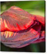 Striped Red Tulip Canvas Print