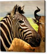 Stripes And Horns 2 Canvas Print