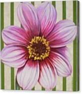 Stripes-dahlia I Canvas Print