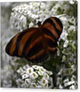 Stripes On Petals Canvas Print