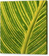 Stripey Leaf Canvas Print