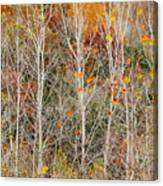Stripped Bare To The Bark Canvas Print
