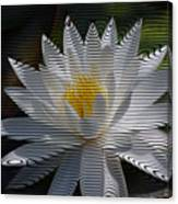 Stripped Waterlily Canvas Print