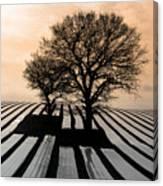 Stripy Evening Canvas Print