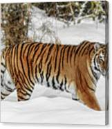 Stroll In The Snow Canvas Print