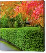 Strolling Path Lined With Japanese Maple Trees In Fall Canvas Print