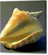 Strombus Inermis Seashell Canvas Print