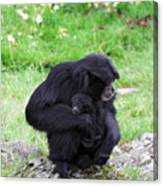 Strong Bond Between Mother And Monkey Canvas Print