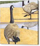 Struttin Thier Stuff Canvas Print