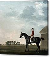 Stubbs: Gimcrack, 1765 Canvas Print