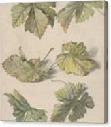 Studies Of Vine Leaves, Willem Van Leen, 1796 Canvas Print