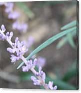 Study In Purple Monkey Grass Bloom Canvas Print