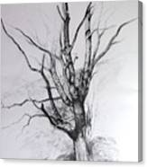 Study Of A Tree Canvas Print